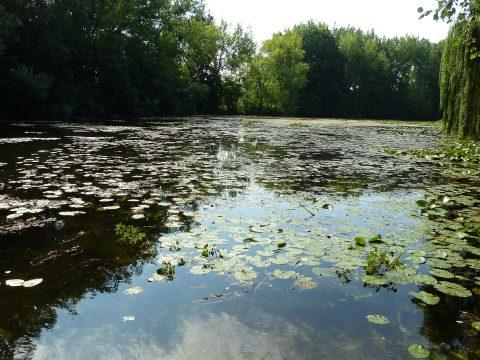 Vodná hladina Klátovského ramena s kvitnúcou močiarnou vegetáciou pri Vodnom mlyne Dunajský Klátov